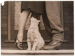 Soldier´s goodbye & Bobbie the cat, Sydney, ca. 1939-ca. 1945 / by Sam Hood